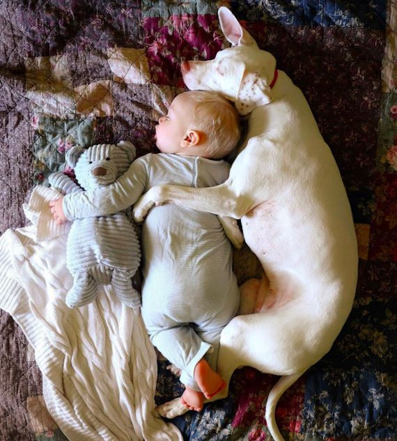 21-tiny-human-dogs
