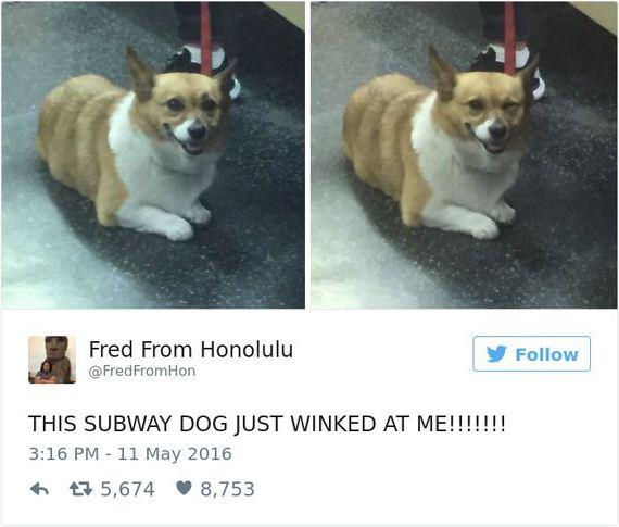 23-funny_dog_tweets