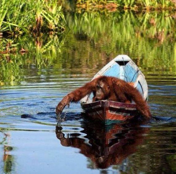 27-unusual_boats