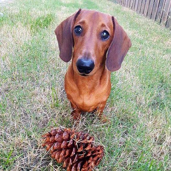 29-lifes-ruff-get-a-dog