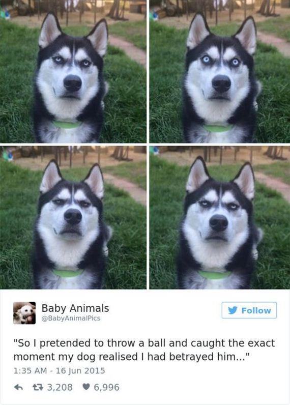 30-funny_dog_tweets