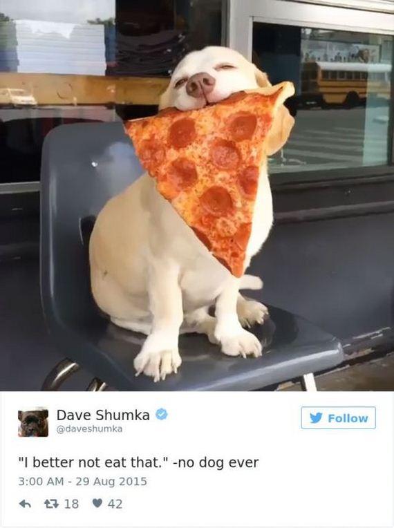 32-funny_dog_tweets