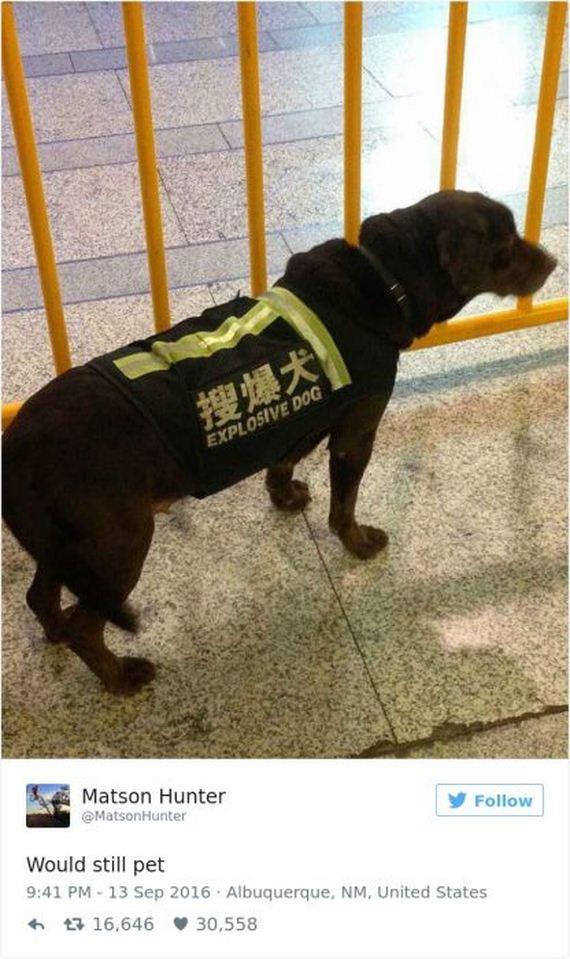 34-funny_dog_tweets