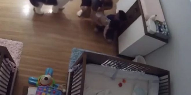 brother-year-catches-falling-infant