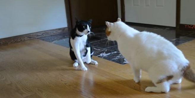 cats-funny
