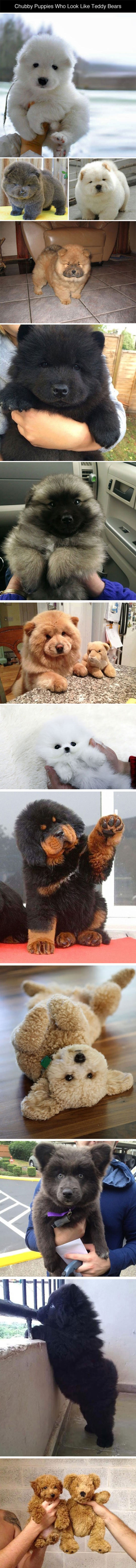 chubby-puppies-teddy-bears