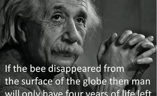 cool-einstein-bee-theory-life0