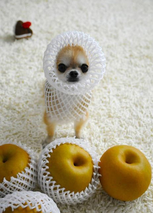 cool-angry-dog-fruit-cover