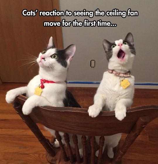 cool-cat-chair-reaction-fan