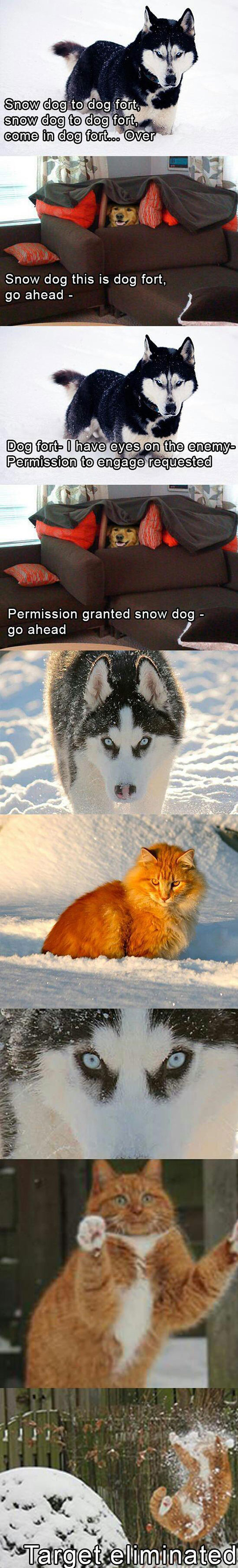 cool-cat-wolf-dog-snow-fight