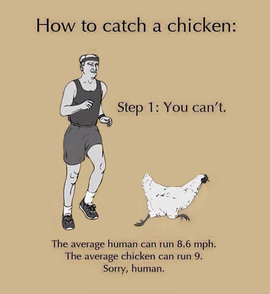 cool-catching-chicken-running-impossible