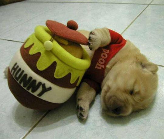cool-dog-winnie-pooh-costume