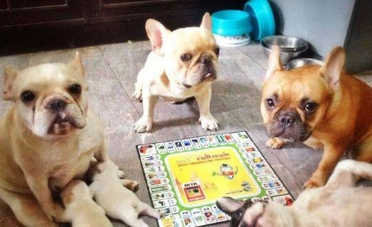 cool-dogs-playing-puppies-game