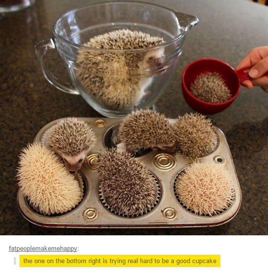 cool-hedgehog-cupcake-tray-pet