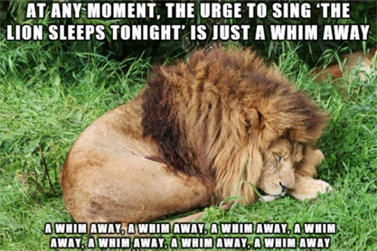 cool-lion-sleeping-lyrics-song-jungle