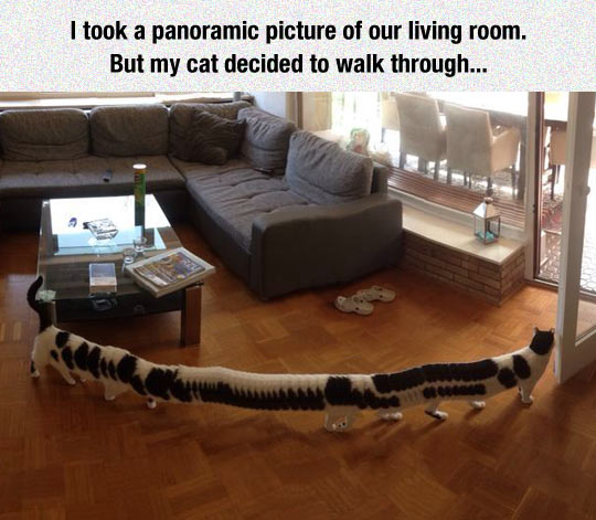 cool-panoramic-picture-living-room-cat