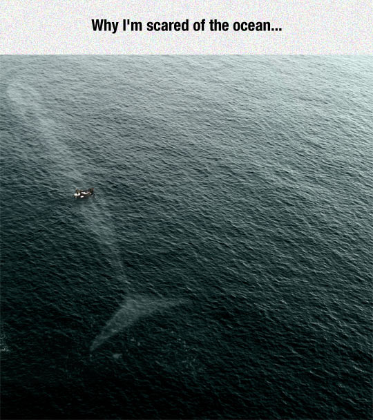 cool-scary-ocean-whale-boat