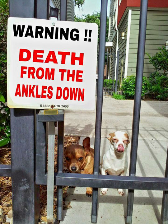 cool-sign-warning-danger-dogs-ankles