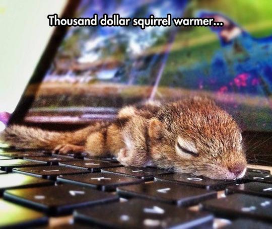 cool-squirrel-computer-sleeping-cute