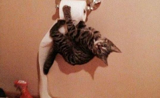cute-cat-hanging-playing-toilet-paper
