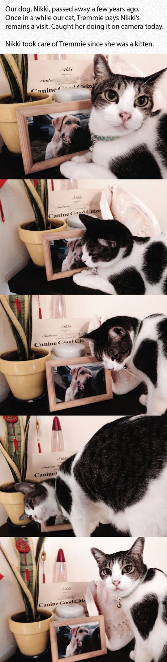 cute-cat-missing-dog-frame