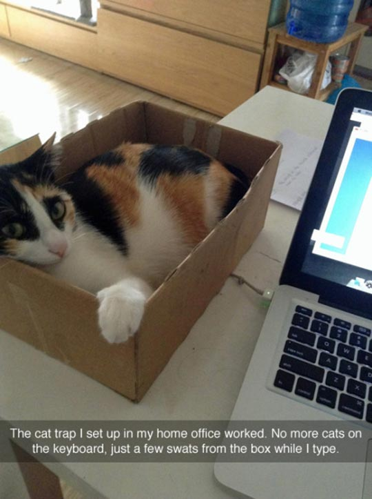 cute-cat-trap-box-laying
