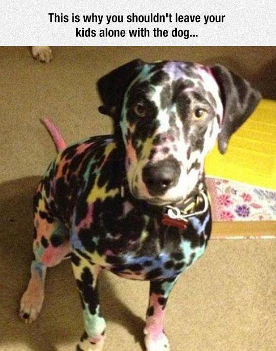 funny-dalmatian-colored-dog-kid