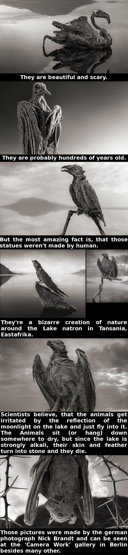 funny-animals-petrified-natural-lake-mummified