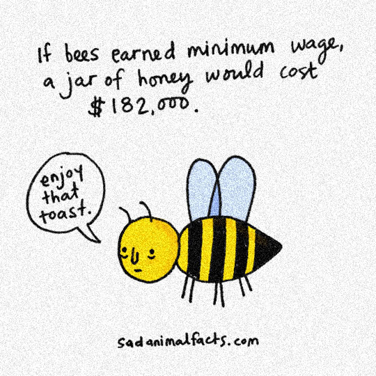 funny-bees-minimum-wage-honey