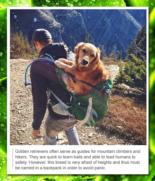funny-carrying-dog-mountain-climbing