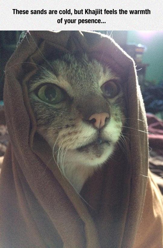 funny-cat-maiq-elder-skrolls-hood