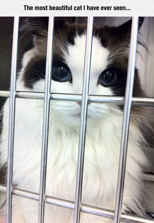 funny-cat-cage-beautiful-big-eyes