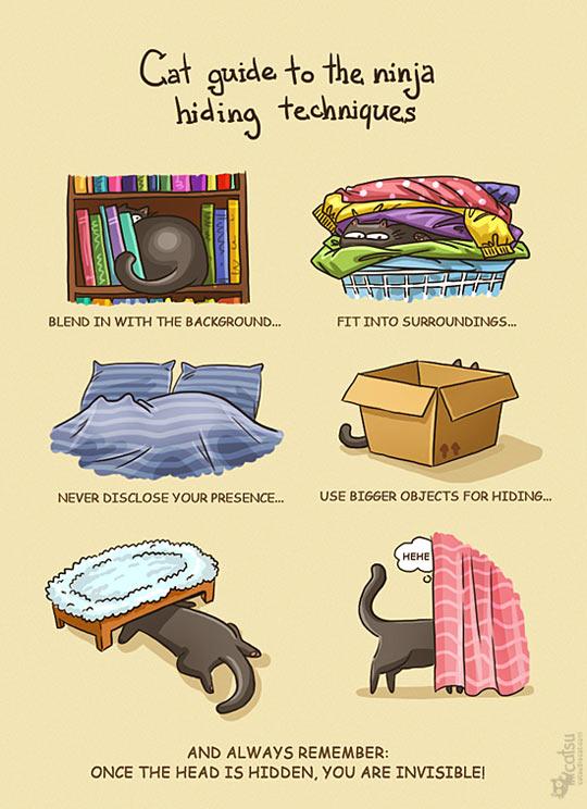 funny-cat-ninja-hiding-techniques
