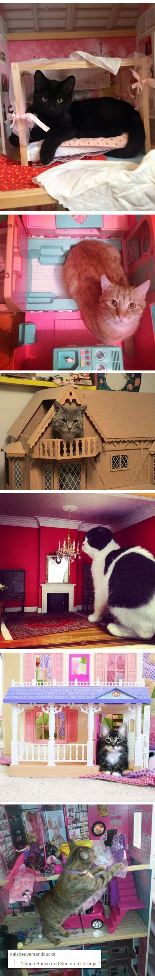 funny-cat-tiny-toy-house-bed
