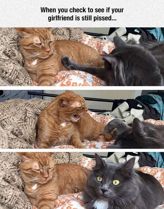 funny-cats-fighting-open-eyes