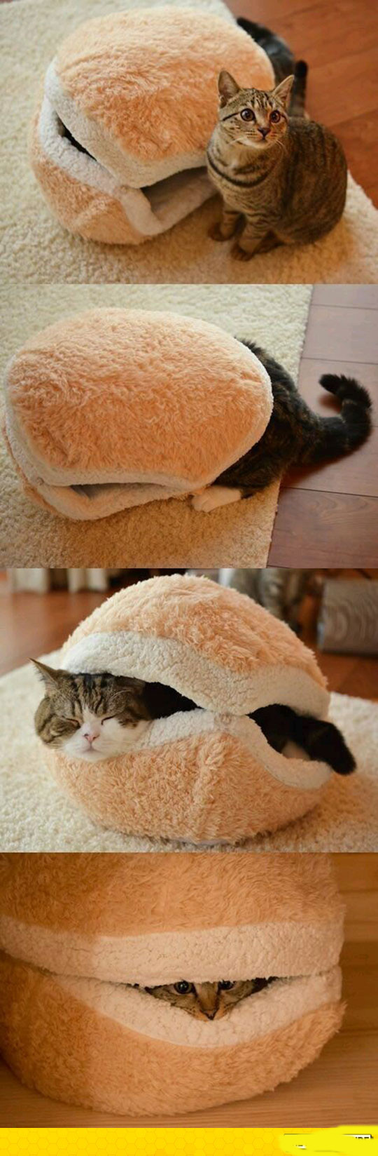 funny-cute-cat-burger-bed