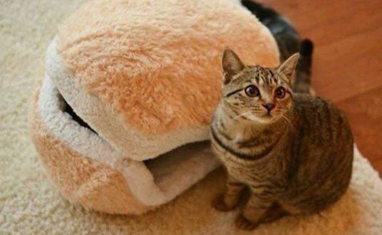 funny-cute-cat-burger-bed0