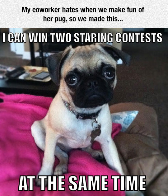 funny-dog-eyes-staring-contest-puppy