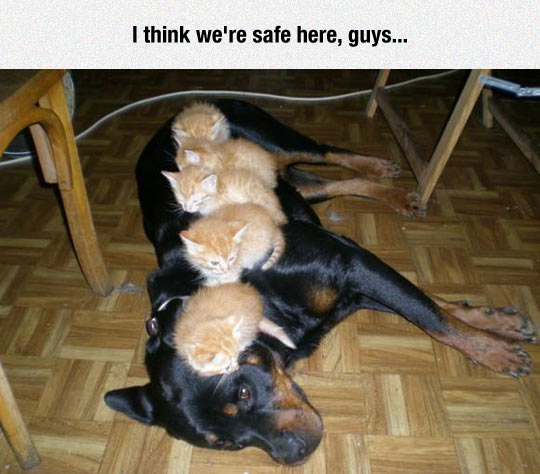 funny-dog-kitties-standing-over