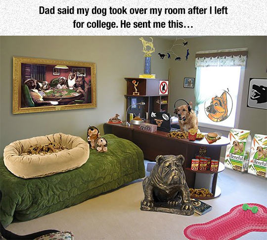 funny-dog-room-kid-leave