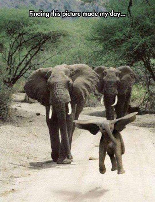 funny-elephant-baby-flying-dumbo