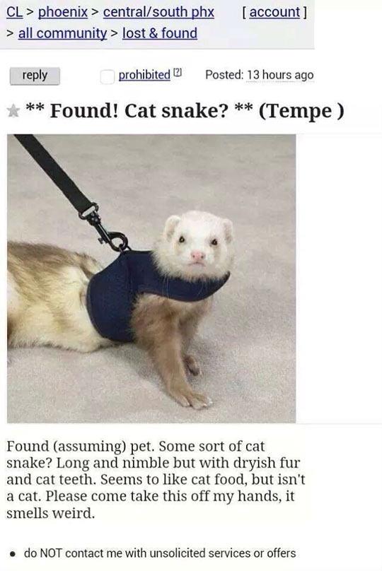 funny-ferret-craigslist-cat-snake