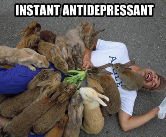 funny-man-floor-lots-bunnies