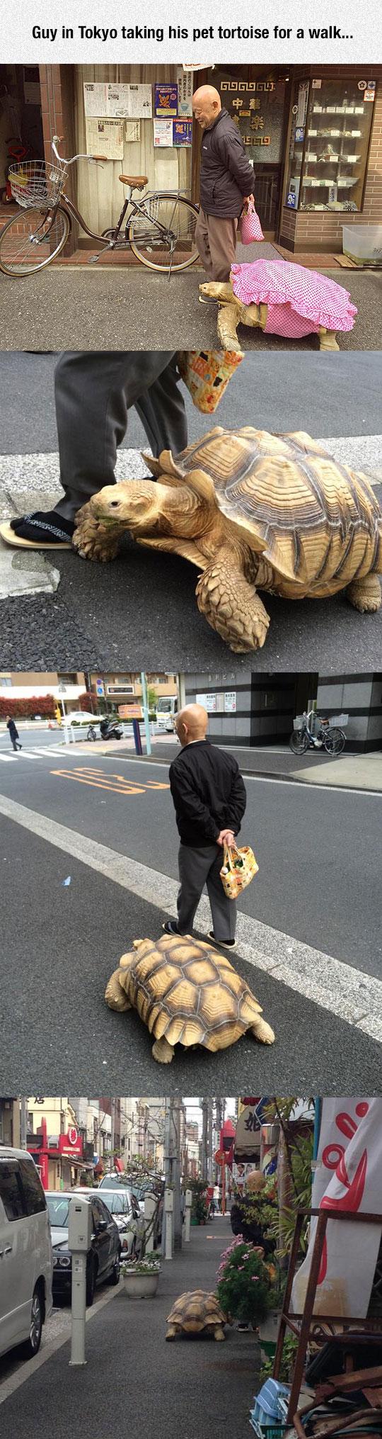funny-man-tortoise-pet-walking