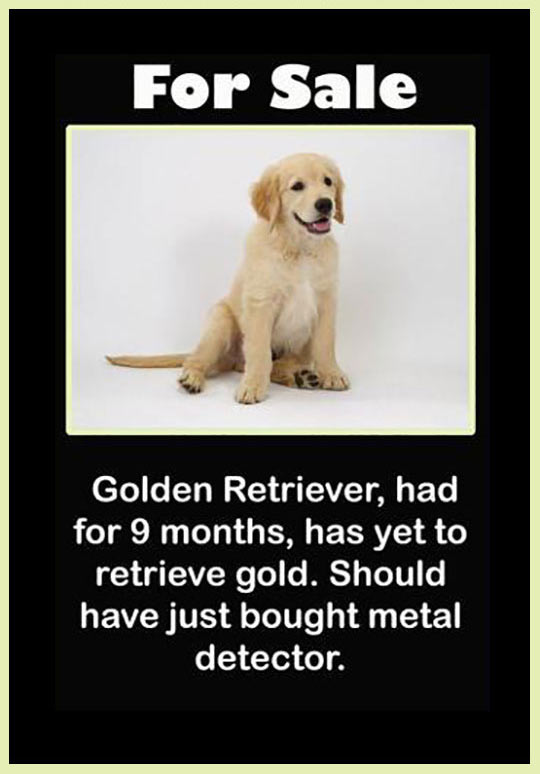 funny-sale-sign-dog-golden-retriever