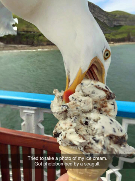 funny-seagull-eating-ice-cream-cone