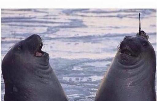 funny-seal-laugh-friend-same-thing