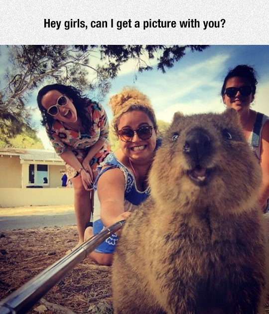 funny-selfie-stick-quokka-animal