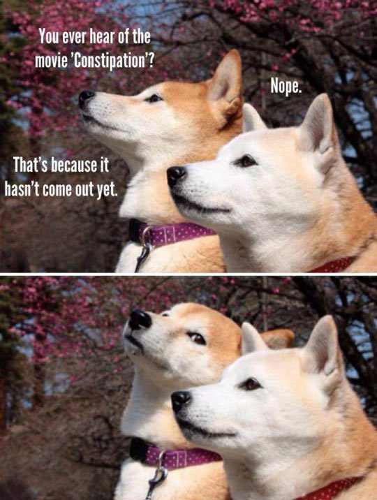 funny-shibes-pun-constipation-friend