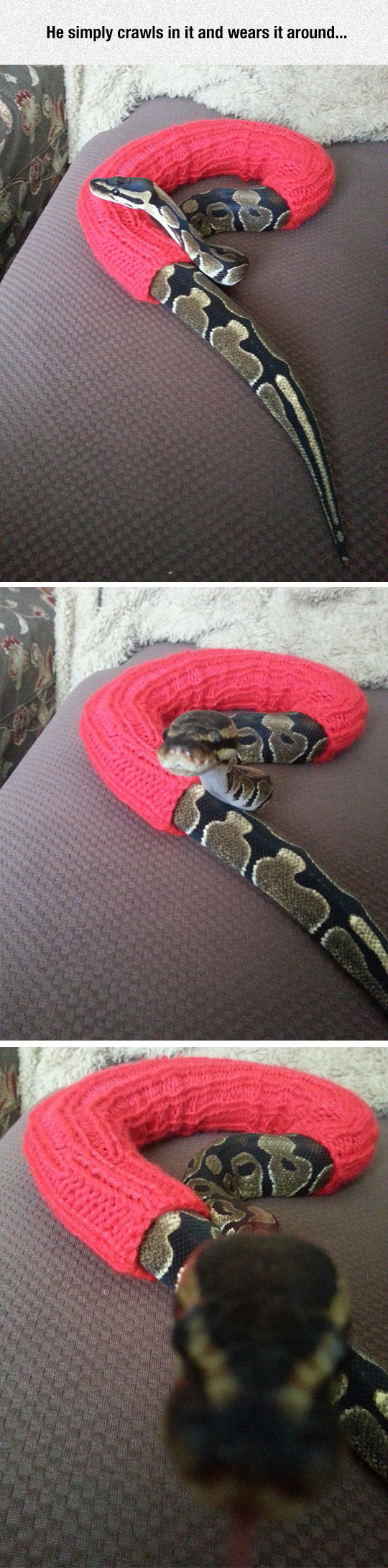 funny-snake-sweater-scary